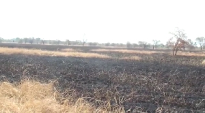 Parts of the burnt rice farm